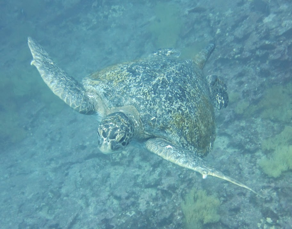 Tortues%20des%20Galapagos