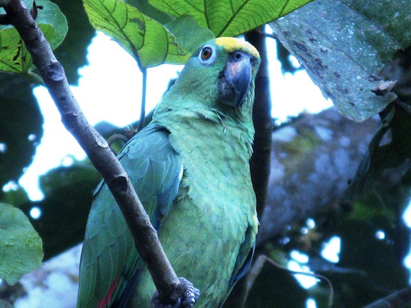 amazonie-perroquet.jpg