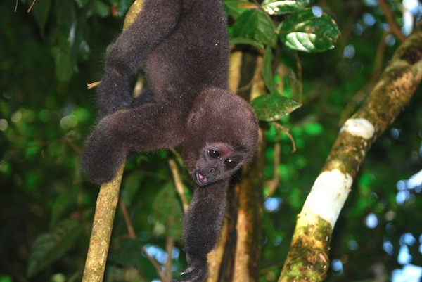 amazonie-singe-2.jpg