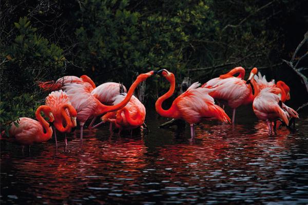 flamingos-1.jpg