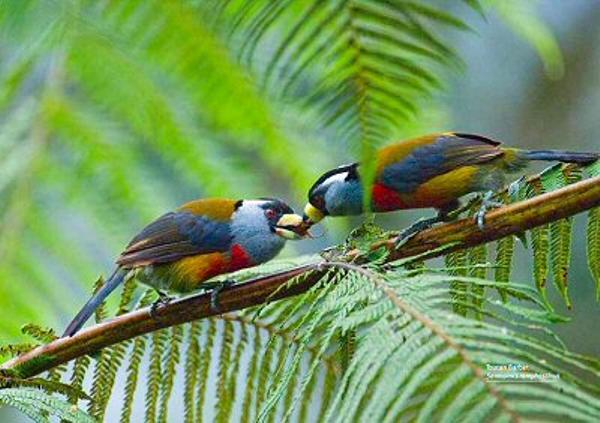 mashpi-birds-00-400w.jpg