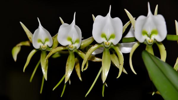 orchidees-54.jpg