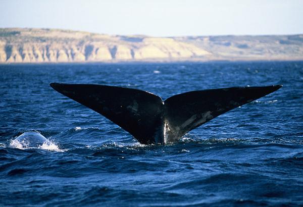 baleine20franche202.jpg