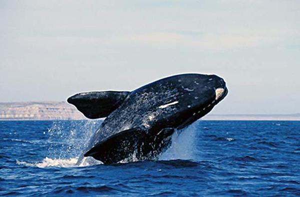 baleine20franche.jpg