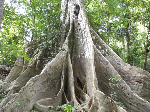 Amazonie colombienne