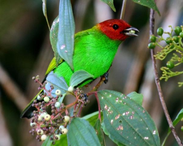 Oiseaux de Colombie