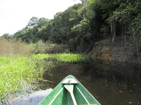 Canoe in the rainforest canals