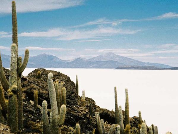 Isla de Incahuasi, Lipez
