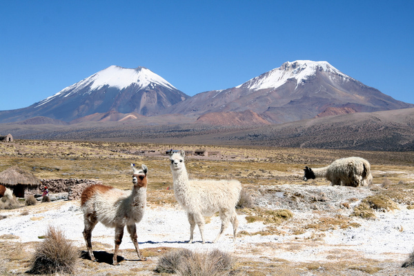 Parinacota and Pomerape volcanos, Sajama national Park,