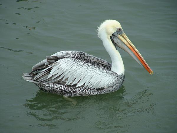 paracas_oiseaux_-14.jpg