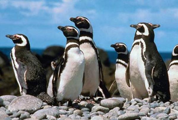 pingouins-2.jpg