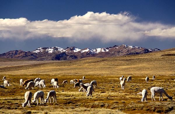 altiplano-arequipa.jpg