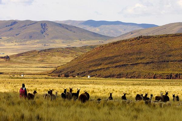 altiplano_paysage_04.jpg