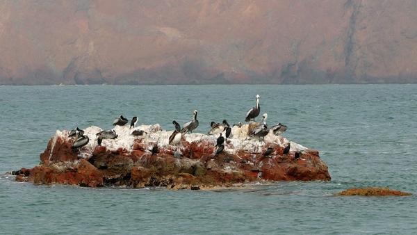 paracas_oiseaux_-4.jpg