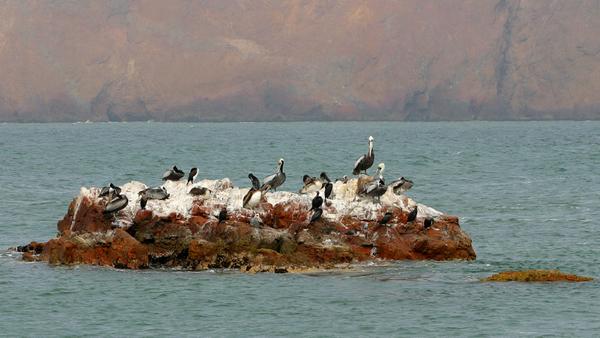 paracas_oiseaux_204.jpg