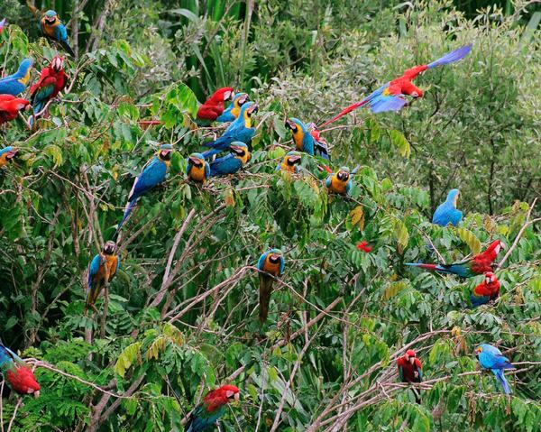 perroquets.jpg