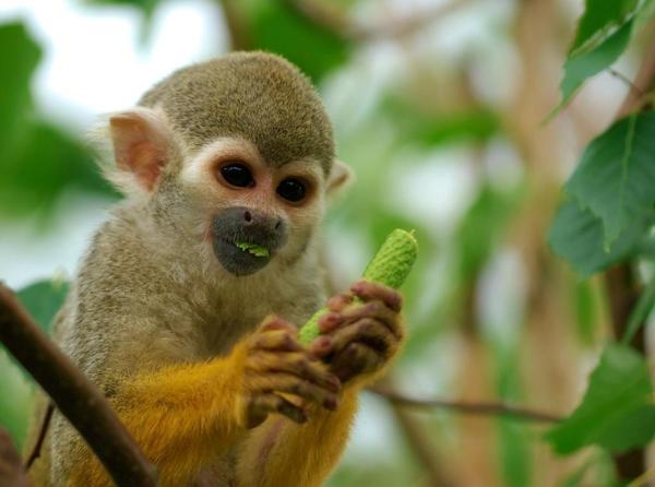 monkey-costa-rica