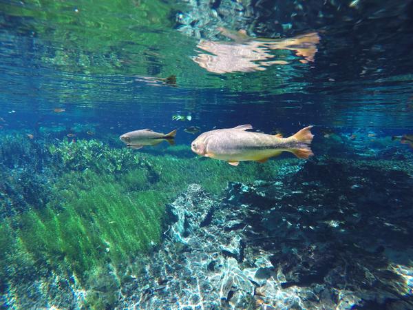 Peche au gros Costa Rica