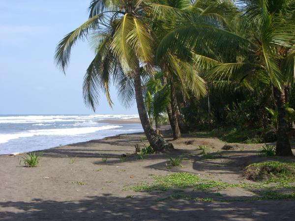 the_beach_at_tortuguero2c_costa_rica.jpg