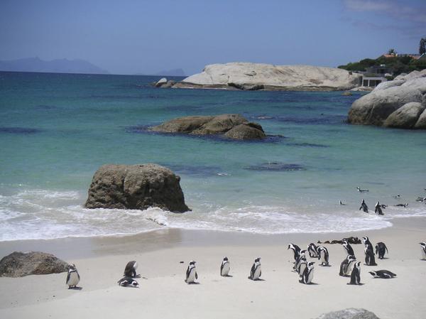 boulders-beach-peninsule-du-cap.jpg