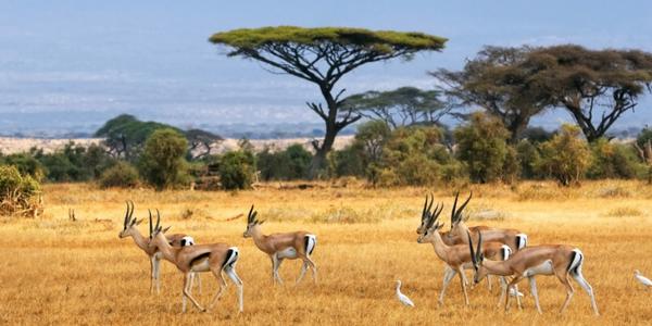 botswana_antelope.jpg
