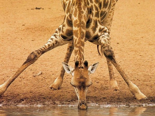 girafecf24b10f7a27133bd0bb30a6ce17c037.jpg