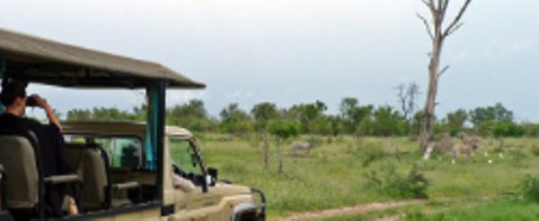 Safari en 4x4 ouvert dans la région du Delta de l'Okavango au Botswana.