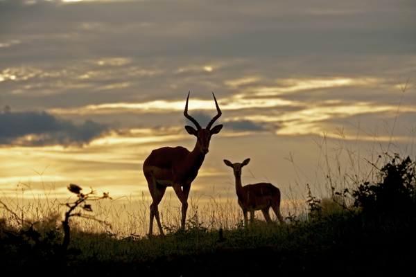 safari-sunset-zambia.jpg