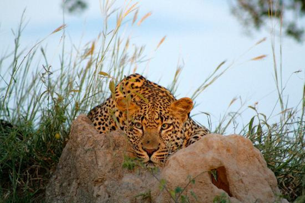 singita-private-game.jpg