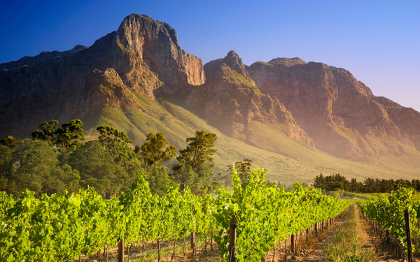 vineyard-in-franschhoek-south-africa_1920x1200_486b2b02c56eff532dd846a9dc5d80316ba.jpg