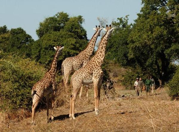 zambia-park-1.jpg