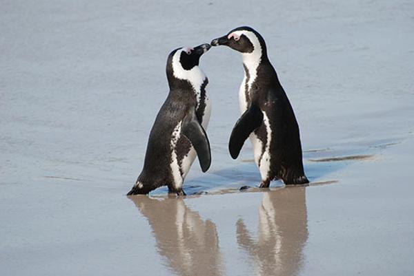 african-penguin.jpg