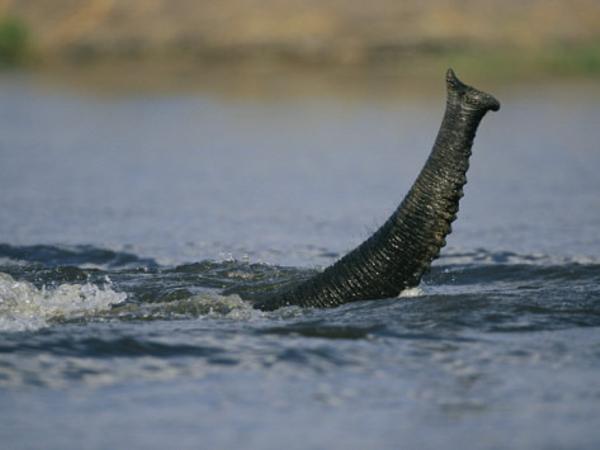 Le trésor du Chobe