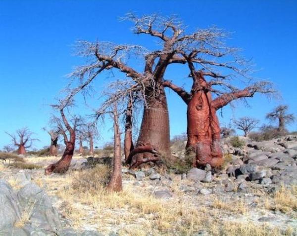 kubu-island-botswana.jpg