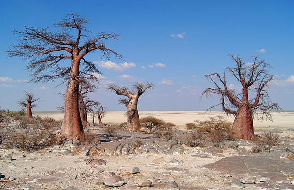 makgadikgadi_pans_national_park_011.jpg