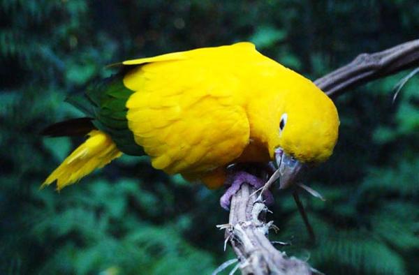 Bird at the Iguaçu Falls