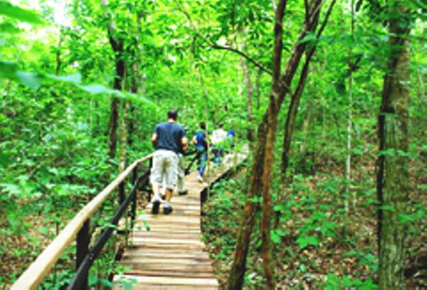 Foret, Pantanal