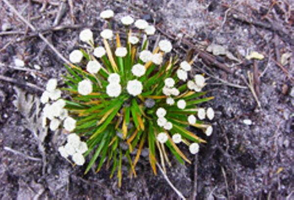 Flowers Chapada Diamantina