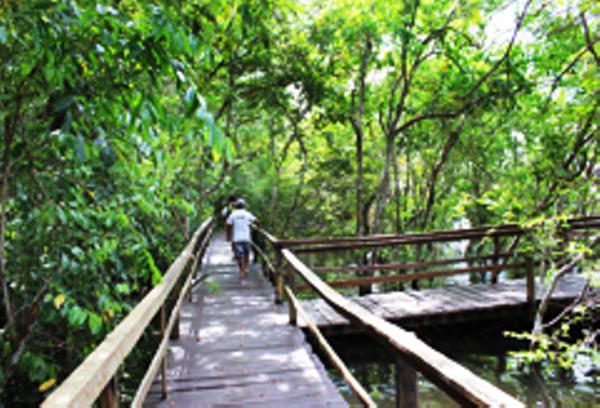 Manaus Flora