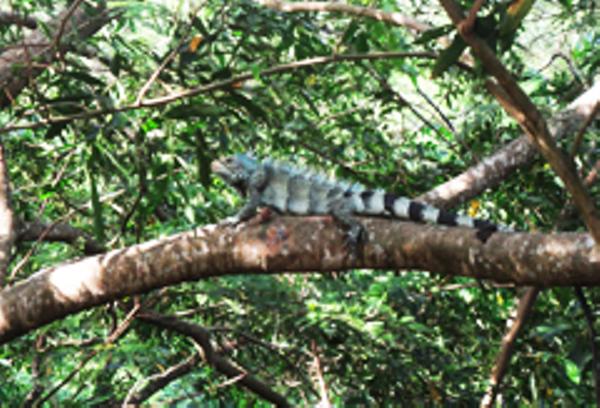 Mount Roraima Fauna