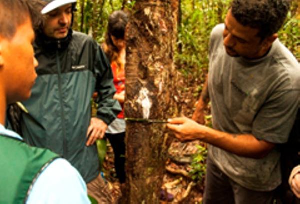 Trees of Manaus