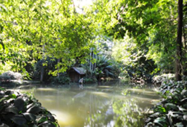 Rio Botanic Garden