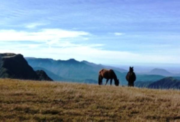 Horses, Canyon Trekking