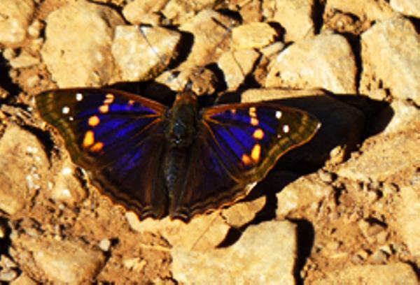 voyage-bresil-faune-papillon.JPG