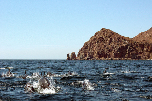 basse-californie-espiritu-santo-dauphins-1.jpg