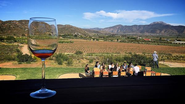vin-basse-californie-5.jpg