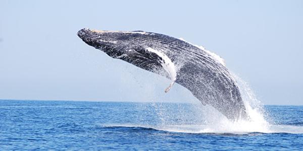 whale-photo2009.jpg