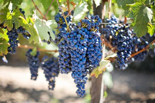 vin_bordeaux-web.jpg