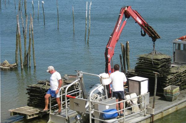 oysters_web-1.jpg