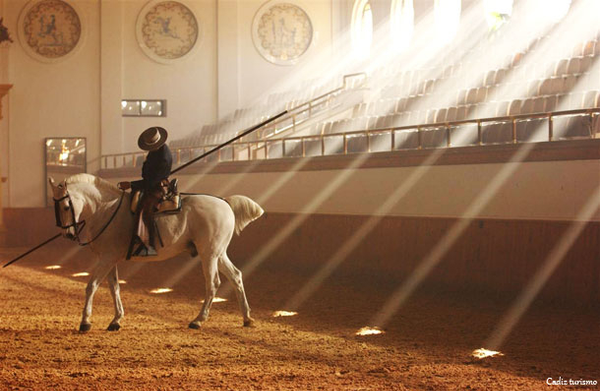 cheval-ecole-royal-art-equestre-jerez-frontera-andalousie.jpg